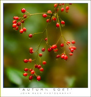 autumn soft NC BH 1110  _85R7344 red berries blur 14s.jpg
